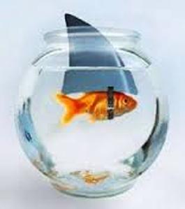 pez tiburcio